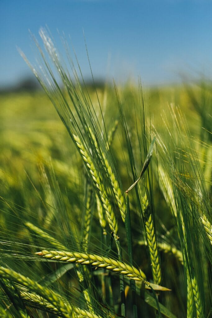 European specialised nutrition wishes to contribute to the growth of organic market in Europe